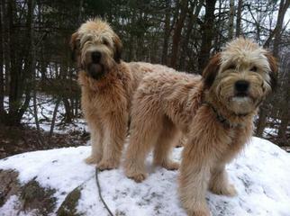 Mountain Summit - Dog Breeders