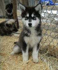 Akna K9 Academy - Dog Breeders