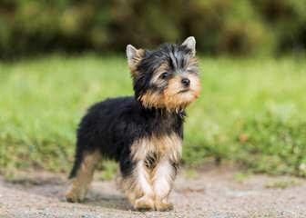 Jj's Pups - Dog Breeders