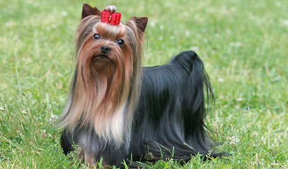 SARA - Dog Breeders