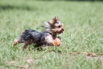 Brummel Country Charm - Dog Breeders