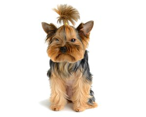 Friendly Pets And Acres - Dog Breeders