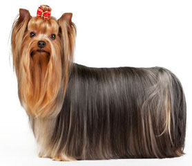 Red Poppy Pets - Dog Breeders