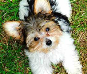 Sniff-N-Paws - Dog Breeders