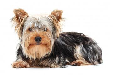 Miller pets - Dog Breeders