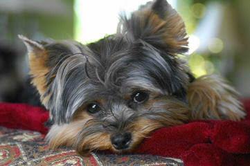 peafaith - Dog Breeders