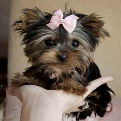 Adorable Puppy Paws - Dog Breeders