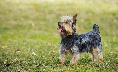 Lindner - Dog Breeders