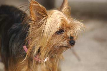 Amanda's Puppies - Dog Breeders