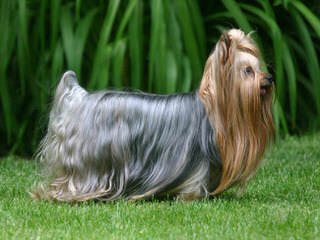 ShilohCreek Kennels - Dog Breeders