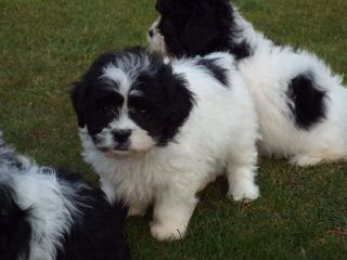 Over 40 Years Breeding Experience - Dog Breeders